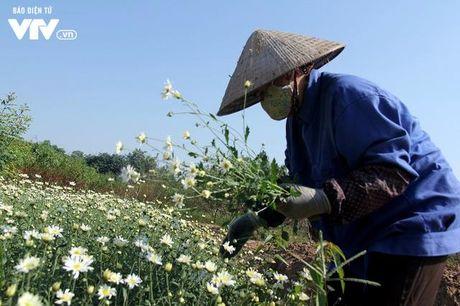Nguoi trong hoa Nhat Tan phan khoi vi cuc hoa mi duoc mua, duoc gia - Anh 11