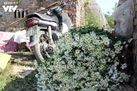Nguoi trong hoa Nhat Tan phan khoi vi cuc hoa mi duoc mua, duoc gia - Anh 13