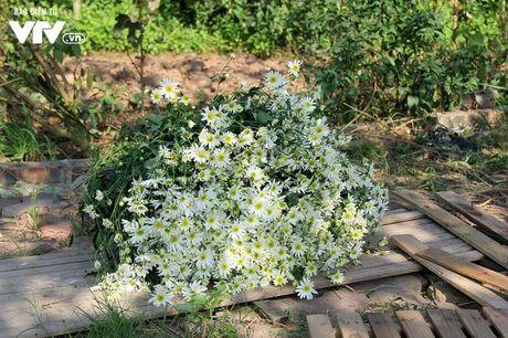 Nguoi trong hoa Nhat Tan phan khoi vi cuc hoa mi duoc mua, duoc gia - Anh 14