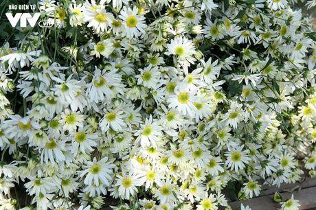 Nguoi trong hoa Nhat Tan phan khoi vi cuc hoa mi duoc mua, duoc gia - Anh 15