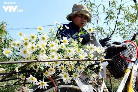 Nguoi trong hoa Nhat Tan phan khoi vi cuc hoa mi duoc mua, duoc gia - Anh 17