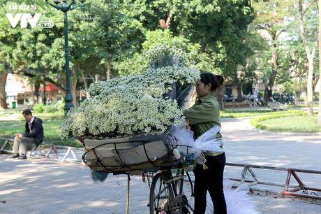 Nguoi trong hoa Nhat Tan phan khoi vi cuc hoa mi duoc mua, duoc gia - Anh 18