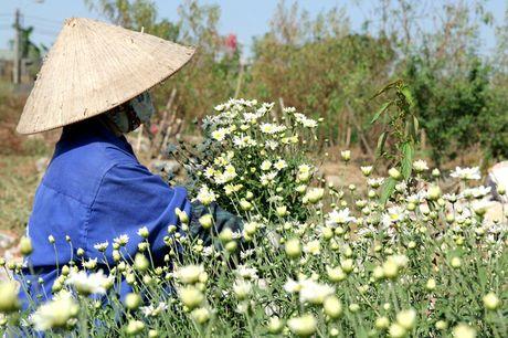 Nguoi trong hoa Nhat Tan phan khoi vi cuc hoa mi duoc mua, duoc gia - Anh 1