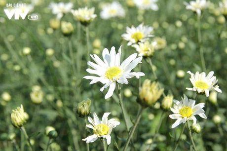 Nguoi trong hoa Nhat Tan phan khoi vi cuc hoa mi duoc mua, duoc gia - Anh 8