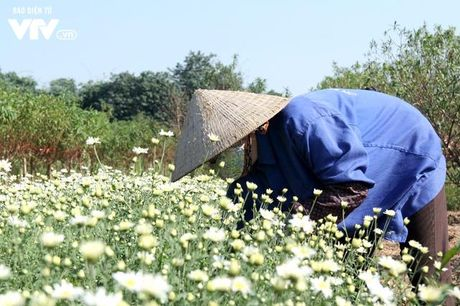Nguoi trong hoa Nhat Tan phan khoi vi cuc hoa mi duoc mua, duoc gia - Anh 9