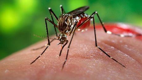 80% truong hop nhiem Zika deu khong co trieu chung mac benh - Anh 1