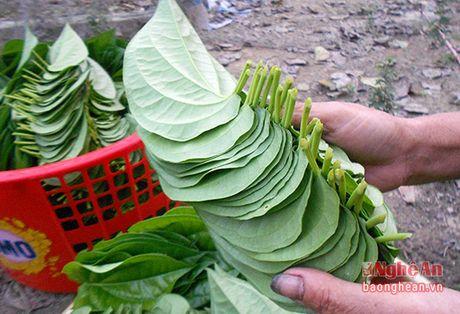 Trau khong Nghe An xuat khau sang Dai Loan - Anh 4