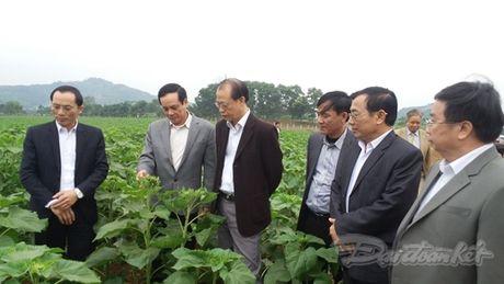 Pho Chu tich Le Ba Trinh tham va lam viec tai Nghe An - Anh 2
