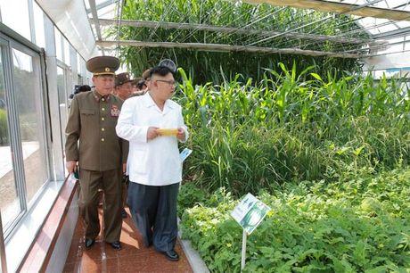 Phong cach dac biet cua Kim Jong Un - Anh 5