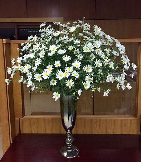 Xem chi em Ha Thanh cam cuc hoa mi ruc ro mot goc nha - Anh 1