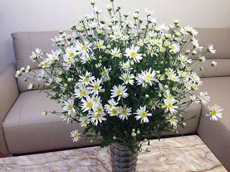 Xem chi em Ha Thanh cam cuc hoa mi ruc ro mot goc nha - Anh 2