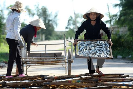 TIN NONG ngay 30-11: Nguoi Ha Noi suyt an phai 200 con lon bi lo mom long mong - Anh 4