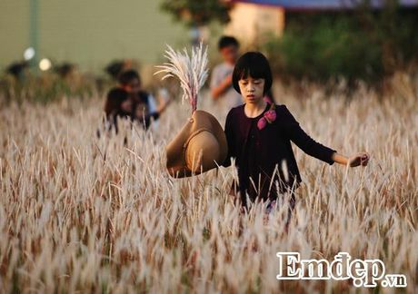 Vuon lau chup anh mien phi dep me man o KDT Linh Dam - Anh 2