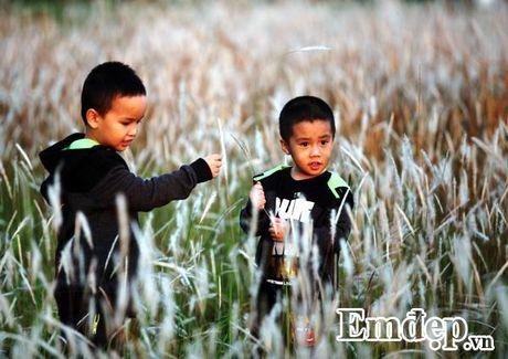 Vuon lau chup anh mien phi dep me man o KDT Linh Dam - Anh 6