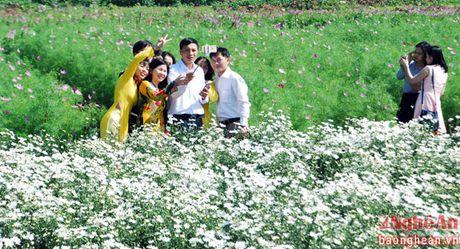 Diu dang cuc hoa mi Ha Noi vao Dong - Anh 2