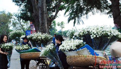 Diu dang cuc hoa mi Ha Noi vao Dong - Anh 4