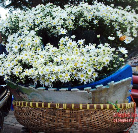 Diu dang cuc hoa mi Ha Noi vao Dong - Anh 6
