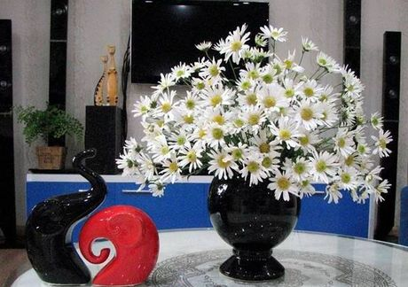 Diu dang cuc hoa mi Ha Noi vao Dong - Anh 8