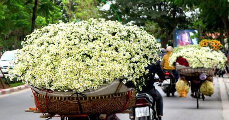 Cuoi mua, cuc hoa mi bung no tren duong pho Ha Noi - Anh 10