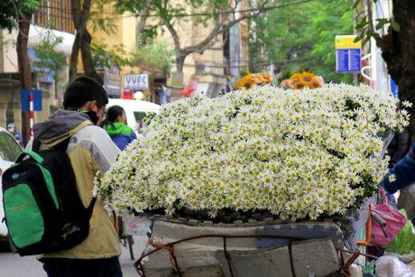 Cuoi mua, cuc hoa mi bung no tren duong pho Ha Noi - Anh 11
