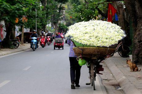Cuoi mua, cuc hoa mi bung no tren duong pho Ha Noi - Anh 12