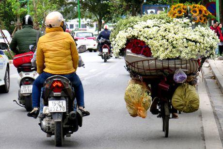 Cuoi mua, cuc hoa mi bung no tren duong pho Ha Noi - Anh 13