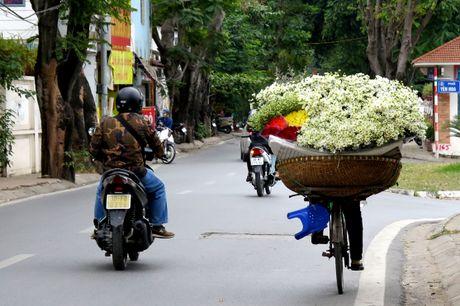 Cuoi mua, cuc hoa mi bung no tren duong pho Ha Noi - Anh 14