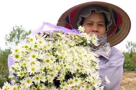 Cuoi mua, cuc hoa mi bung no tren duong pho Ha Noi - Anh 7