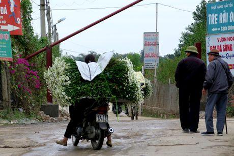 Cuoi mua, cuc hoa mi bung no tren duong pho Ha Noi - Anh 8