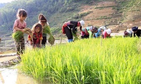 Lao dong tre em chu yeu lam viec trong linh vuc nong nghiep - Anh 1
