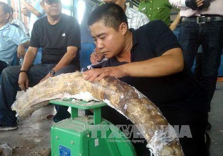 Giau tinh vi 529 kg nga voi trong cac khuc go - Anh 1