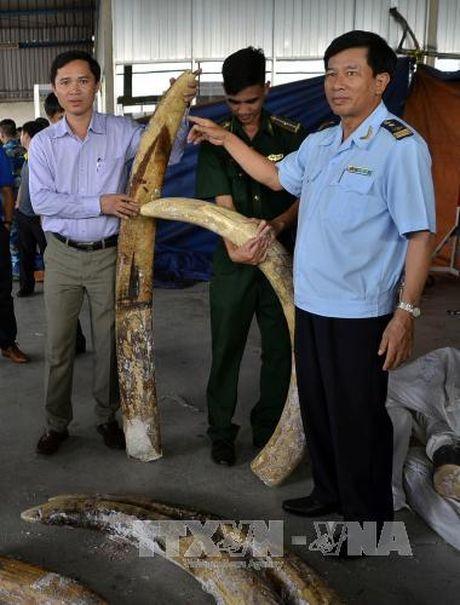 Giau tinh vi 529 kg nga voi trong cac khuc go - Anh 2