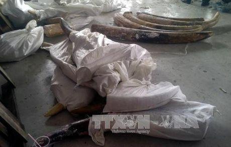Giau tinh vi 529 kg nga voi trong cac khuc go - Anh 3