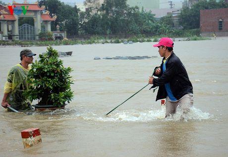 Chum anh: Nong dan Binh Dinh lieu minh 'vat lon' trong lu cuu mai - Anh 5