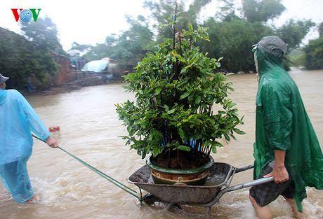 Chum anh: Nong dan Binh Dinh lieu minh 'vat lon' trong lu cuu mai - Anh 6