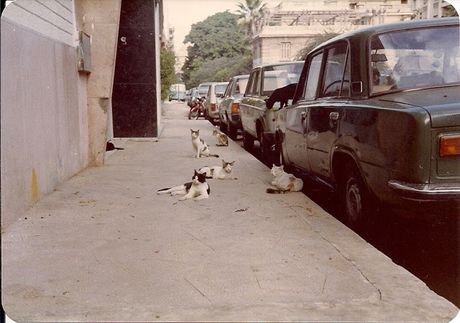 Hinh anh duong pho Alexandria, Ai Cap cuoi thap nien 1970 - Anh 12