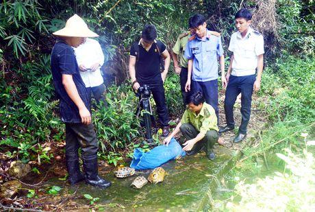 Vuon Quoc gia Bai Tu Long - Vuon di san ASEAN - Anh 1