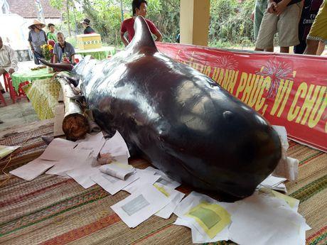 Ca voi gan 800 kg lac vao bo bien Quang Ngai - Anh 1