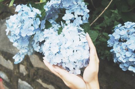 Cao Bang: Ngam vuon hoa Cam tu cau ruc ro tren rung Phia Den - Anh 1