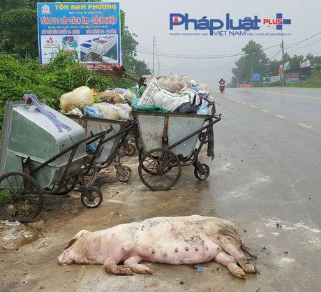 Tuyen Quang: Hai hung xac dong vat va rac thai tren dai lo Tan Trao - Anh 1