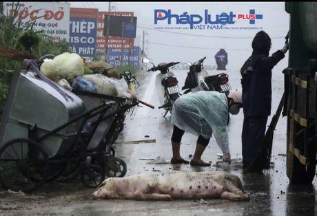 Tuyen Quang: Hai hung xac dong vat va rac thai tren dai lo Tan Trao - Anh 2