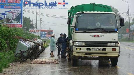 Tuyen Quang: Hai hung xac dong vat va rac thai tren dai lo Tan Trao - Anh 6