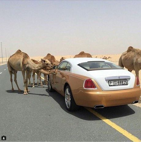 Dang cap tieu tien cua 'Hoi con nha giau Dubai' - Anh 1