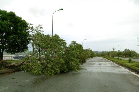 TP Vinh sau bao: Hang ngan cay xanh bat goc tren cac tuyen pho - Anh 1