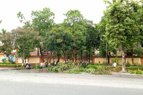 TP Vinh sau bao: Hang ngan cay xanh bat goc tren cac tuyen pho - Anh 7