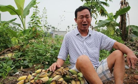 Vu con do chat nat vuon chuoi: Ban Noi chinh Thanh uy Hai Phong de nghi khoi to vu an - Anh 1