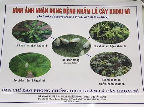 Cong bo dich benh kham la tren cay san - Anh 1