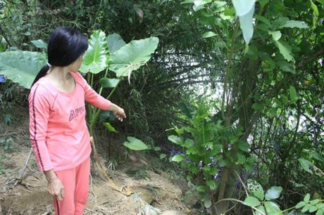 Quang Ngai: 36 ho lo song cuon het dat o - Anh 1