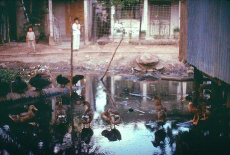 Anh doi thuong sieu song dong o Can Tho nam 1968-1969 (1) - Anh 9
