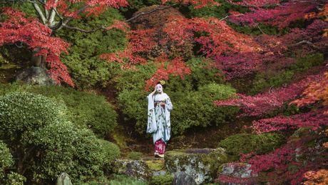 Khoanh khac bi mat cua Maiko: Theo chan hoc vien Geisha Nhat Ban - Anh 9